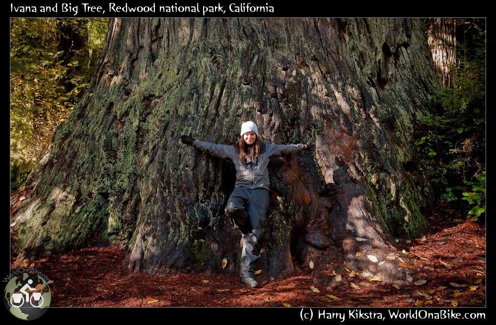 Redwood parks, famous for their big Redwood and Giant Sequoia trees.